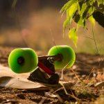 Wasabi wheels in the sun